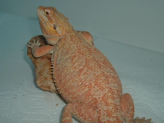 Female breeders